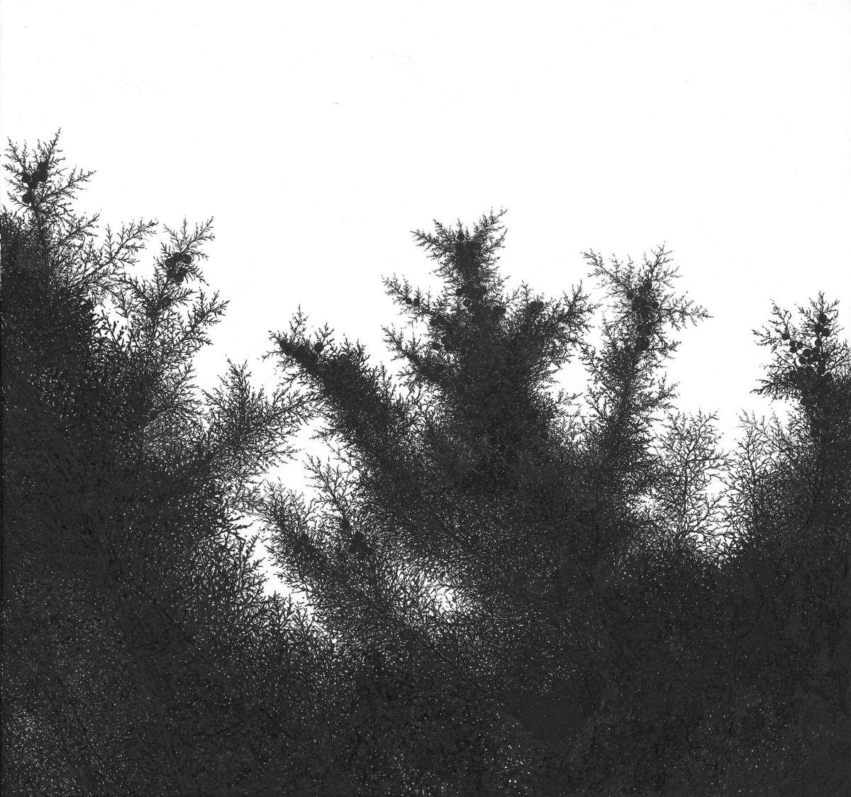 Tina Konec, Fractalic III, risba, umetnost, drevo, detajl, črno in belo, fraktali, fraktal, fractal, fractals, drawing, art, black and white, leaves, ink